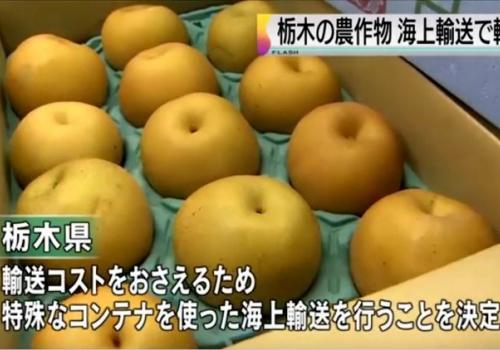Специальные контейнеры для экспорта морем свежих японских фруктов